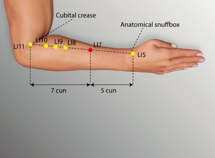 LI 7 - WENLIU Large Intestine Meridian Acupuncture Point ...