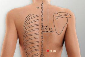 BL 20-Pishu acupoint