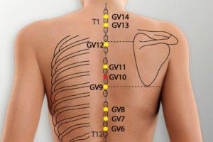 GV 10-Lingtai acupoint