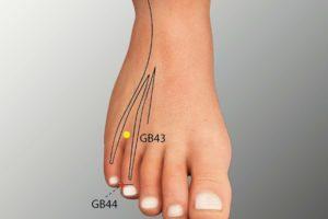 GB 44-Zuqiaoyin acupoint