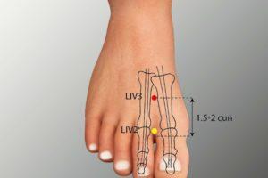 LIV 3-Taichong acupoint