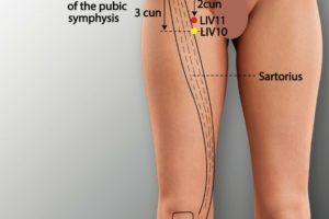 LIV 11-Yinlian acupoint