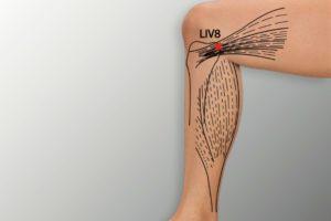 LIV 8-Ququan acupoint