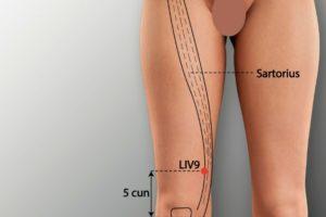 LIV 9-Yinbao acupoint