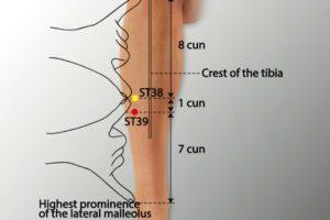 ST 39-Xiajuxu acupoint