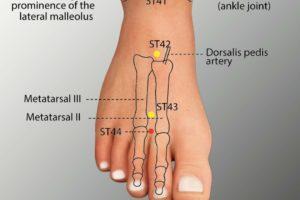 ST 44-Neiting acupoint